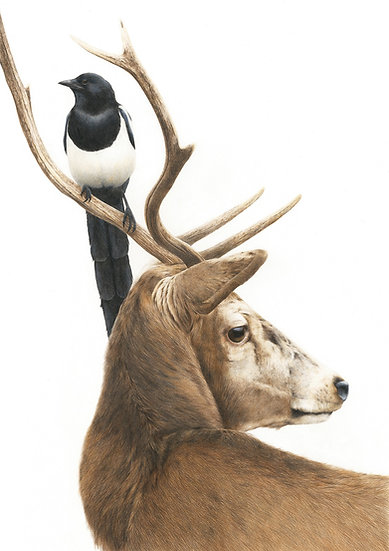 Red deer and magpie