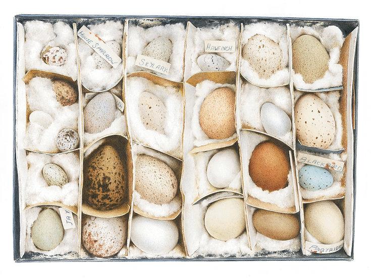 John's eggs