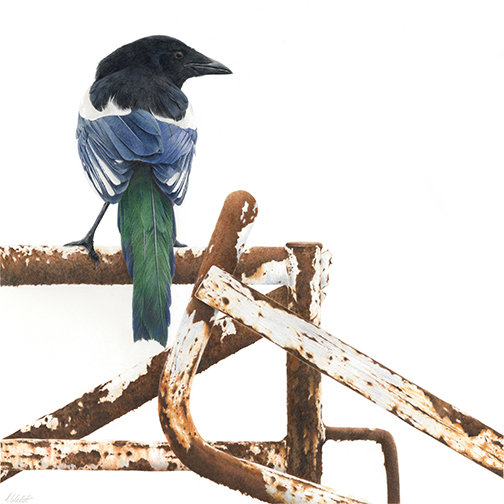 Magpie on gate
