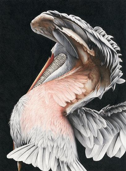 Pelican unfolding