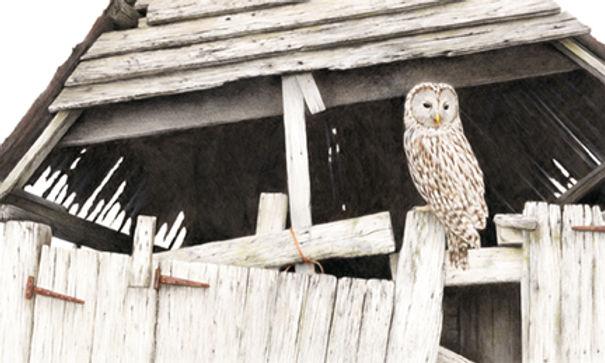 ural owl lo res.jpg