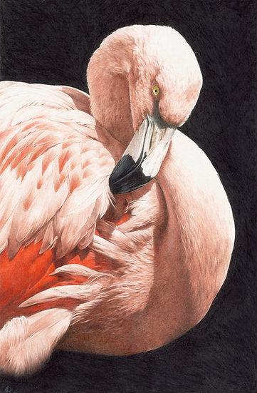 Flamingo study #2