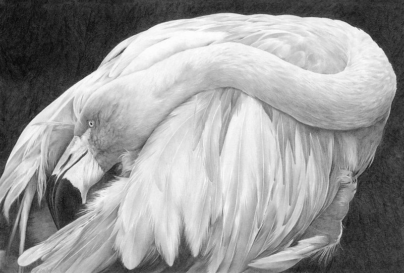 Flamingo study #3 (graphite)