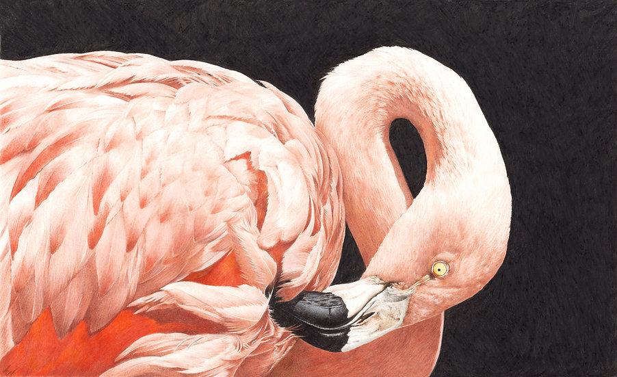 Flamingo study #1