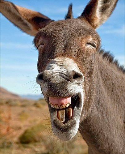 burro que rie.jpg