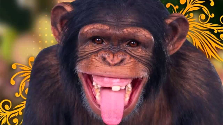 chimpancé_riendo.jpg
