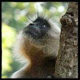 Revealing the Monkey