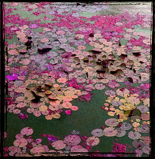 Remembrance of Giverny