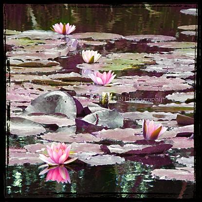 The Magic Pond