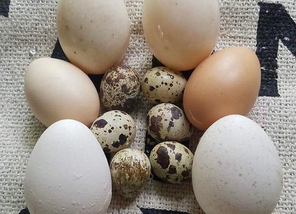 Quail Eggs (15 pack)