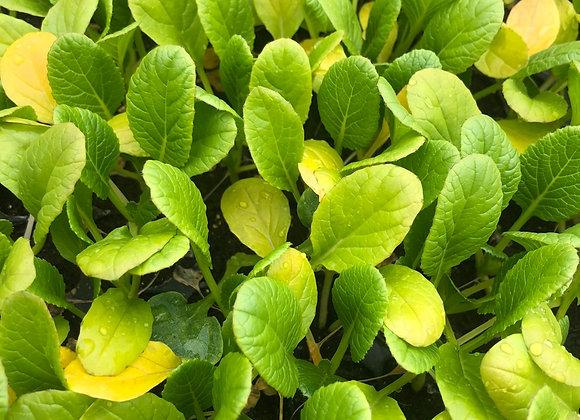 Asian Green Plants