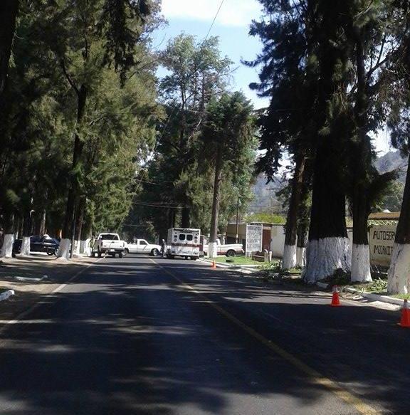 Podan_ramas_en_la_avenida_Lázaro_Cárdenas_edited