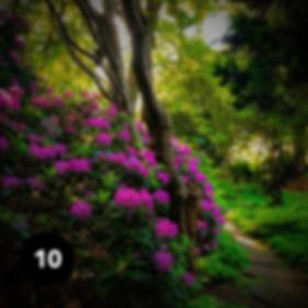 Planten_un-Blomen_Insta10.png