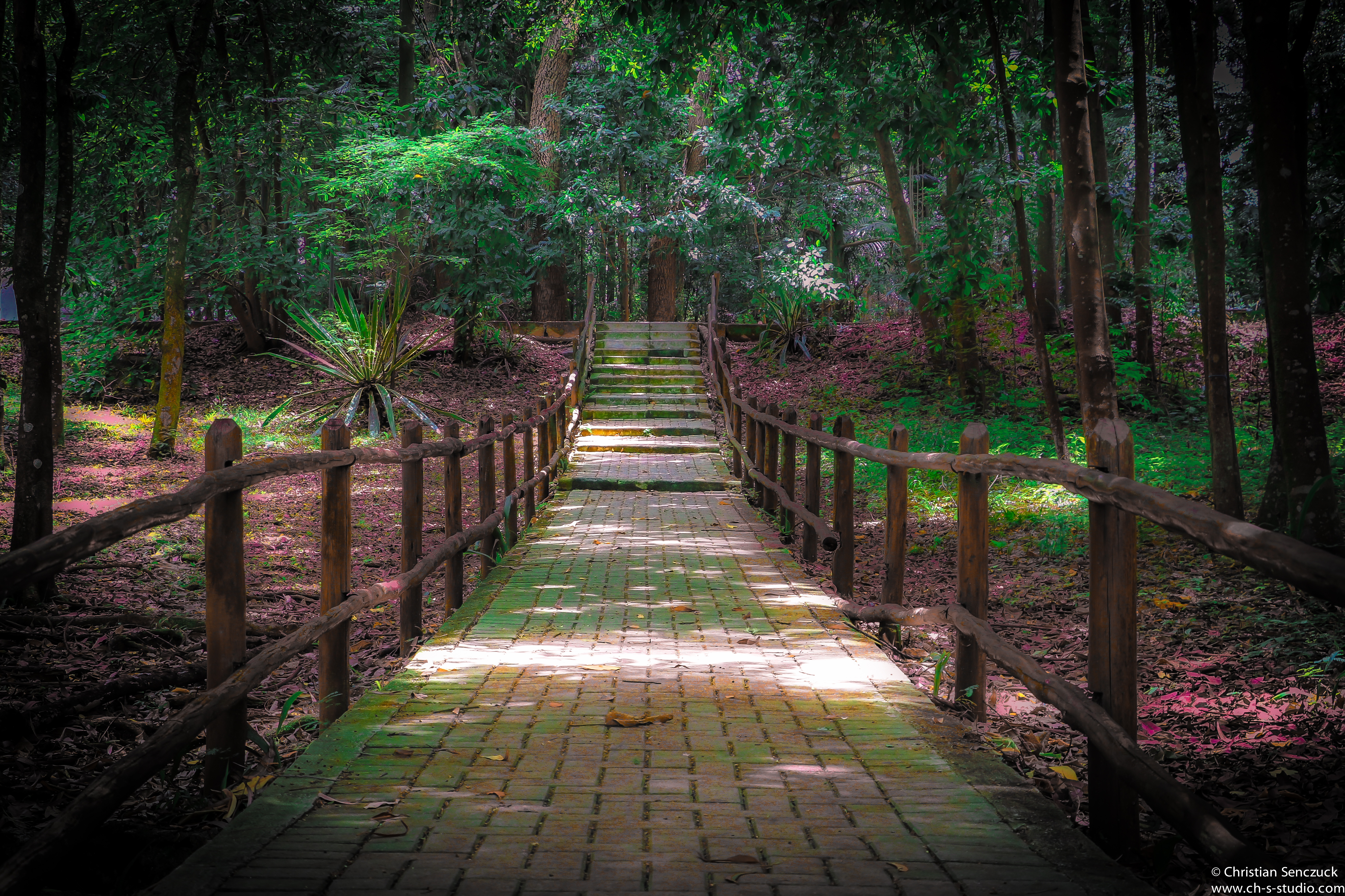 Horto Florestal SP