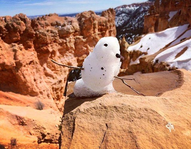 Chirp 🐦 #winterwonderland #brycecanyon