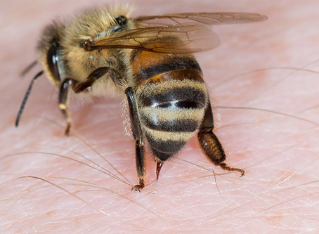 Dites Stop aux piqûres d'insectes !