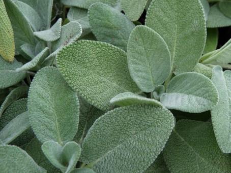 Ménopause : les Plantes à connaître