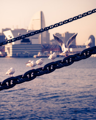 The seagulls of Yokohama