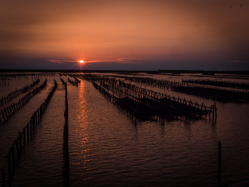 Sunset over oysters