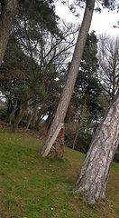 tree for edward 2.jpg
