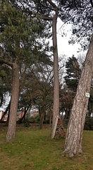 tree for edward 3.jpg