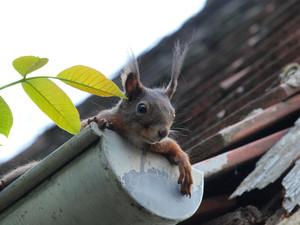 Fallende Blätter? Zeit für einen Dach-Check!