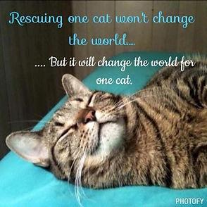 cat adoption.jpg