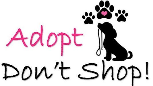 adopt%20dont%20shop_edited.jpg