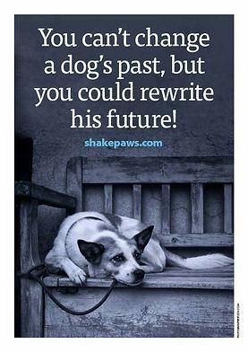 dog adoption.jpg