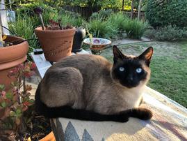Cat sitting  -  Santa Barbara Pet Sitters