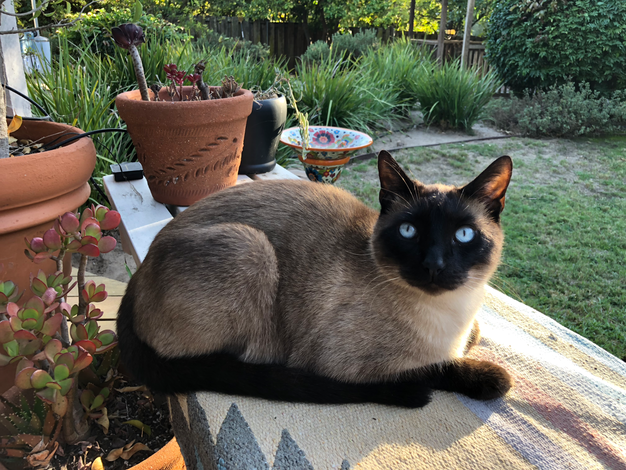 Cat sitting  -  Santa Barbara Pet Sitters