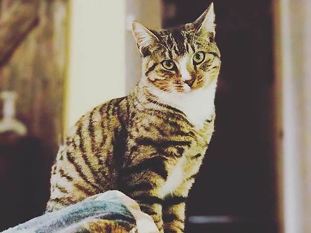 Odin - Santa Barbara Pet Sitters