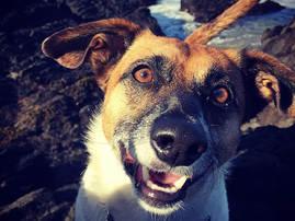 Dog Excursion -  Santa Barbara Pet Sitters