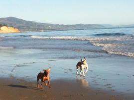 Beach Excursion  -  Santa Barbara Pet Sitters