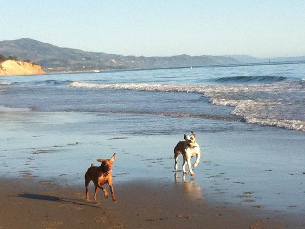 Beach Excursion  -  Santa Barbara Pet Sitters