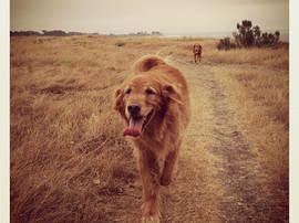 Dog Sitting  -  Santa Barbara Pet Sitters