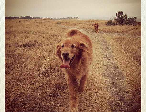 Dog Sitting  -  Santa Barbara Pet Sitters