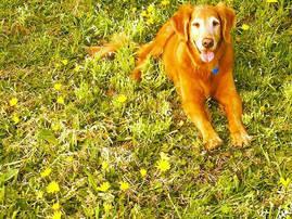 Daisy - Santa Barbara Pet Sitters