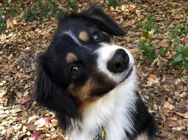I love my dog sitter  -  Santa Barbara Pet Sitters