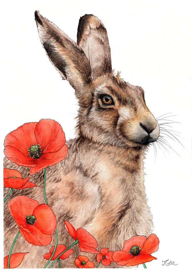 Hare with Poppies