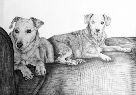 Dog Duo Commission