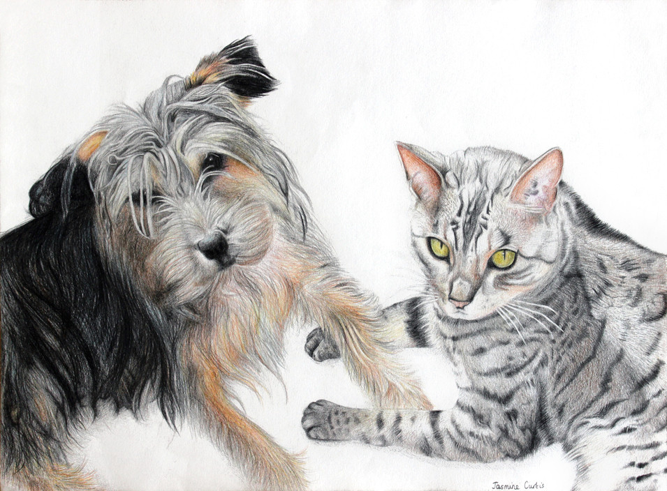 Cat and Dog Commission