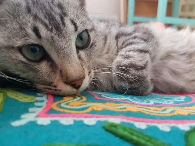 הום-סטיילינג בזק: כשהלקוח שלך הוא חתול