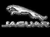 jaguar .png