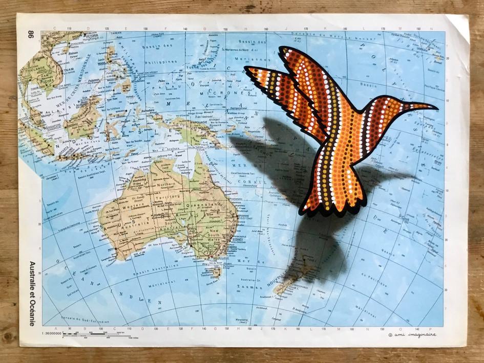 Colibri voyageur - Australie - DISPO