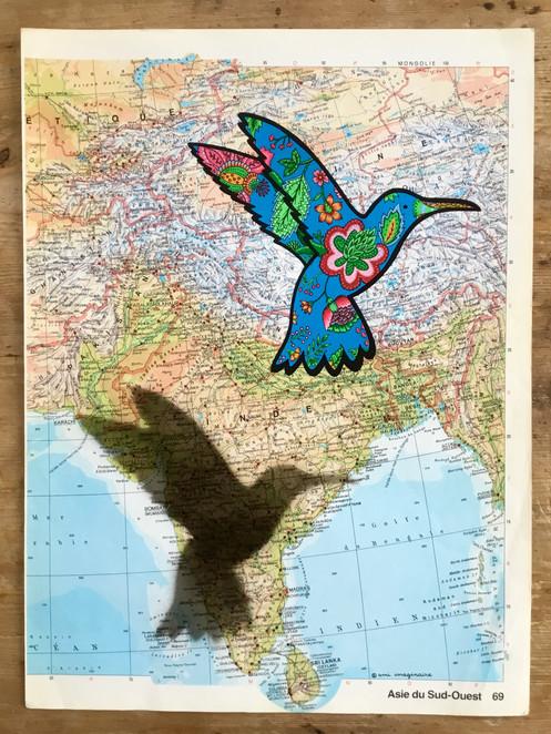 Colibri voyageur - Inde - DISPO