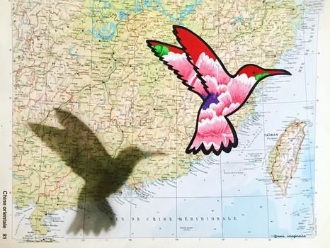 Colibri voyageur : Taïwan - DISPO