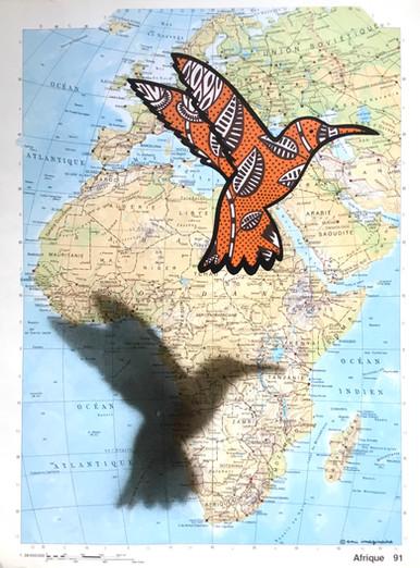 Colibri Voyageur - Afrique - DISPO