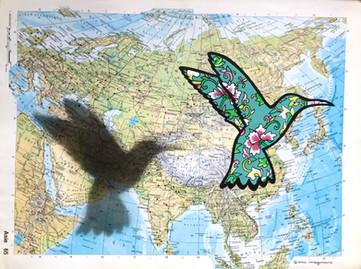 Colibri Voyageur - Asie - DISPO