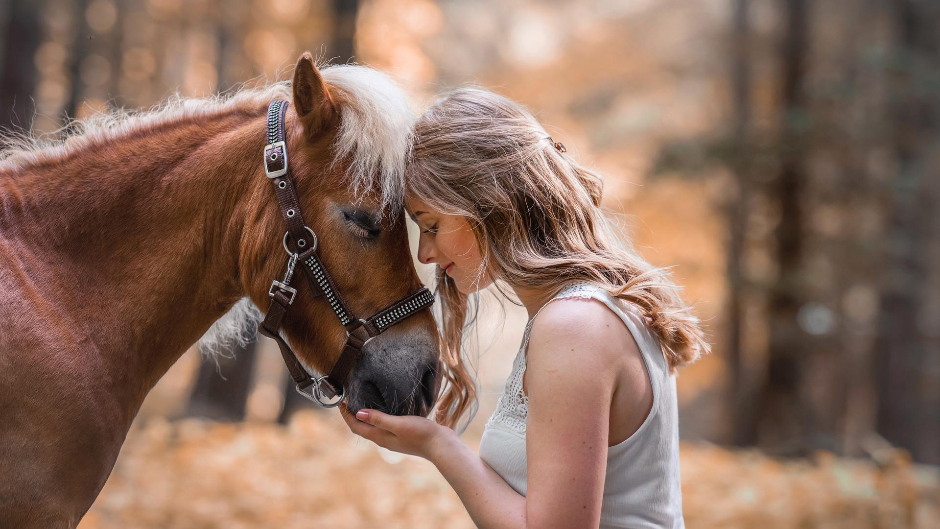 2 Pferd Herbst.jpg
